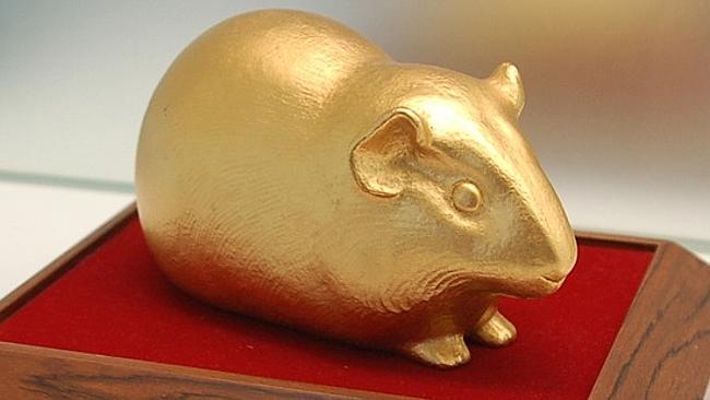 Sony-Guinea-Pig