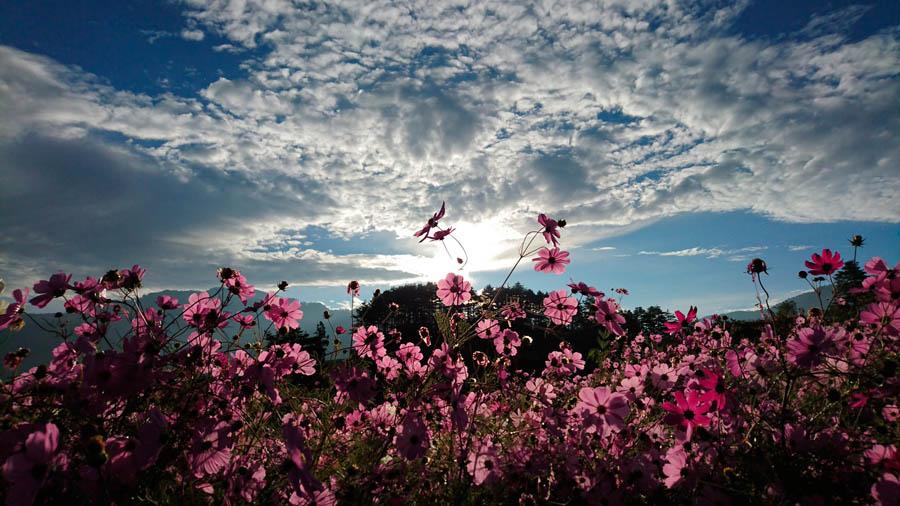 фото камера Xperia Z5 цветок макро
