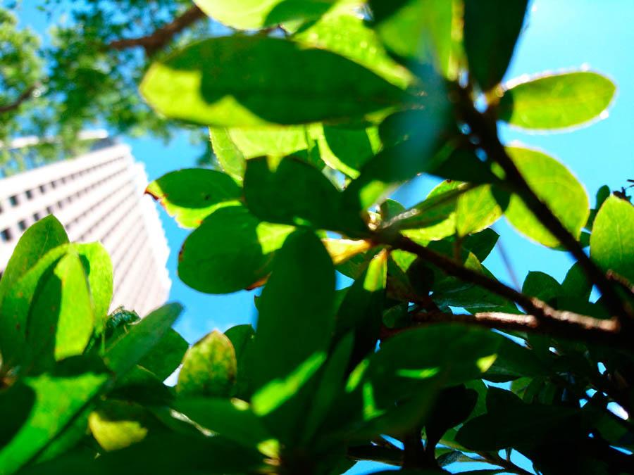 фото камера Xperia Z5
