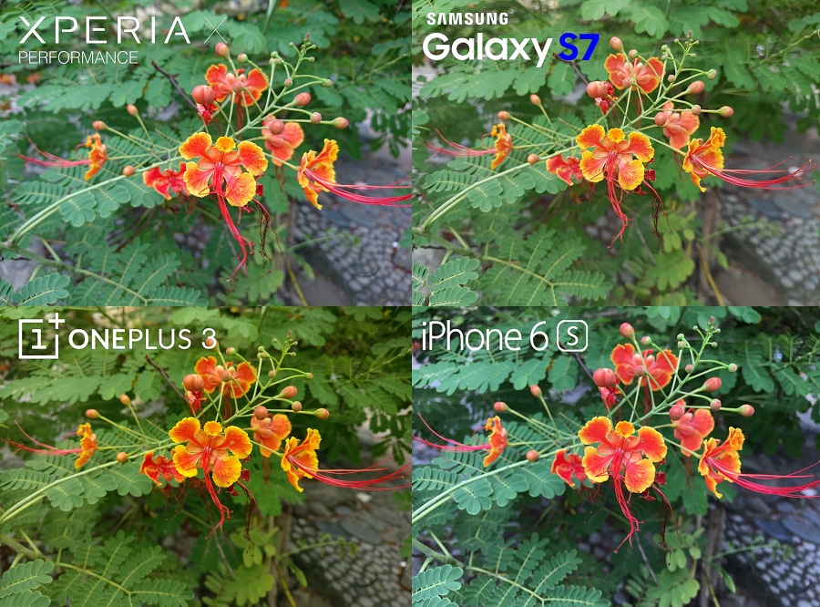 Xperia-X-Performance-vs-Galaxy-S7-iphone-6s-comparison-cameras-macro-1